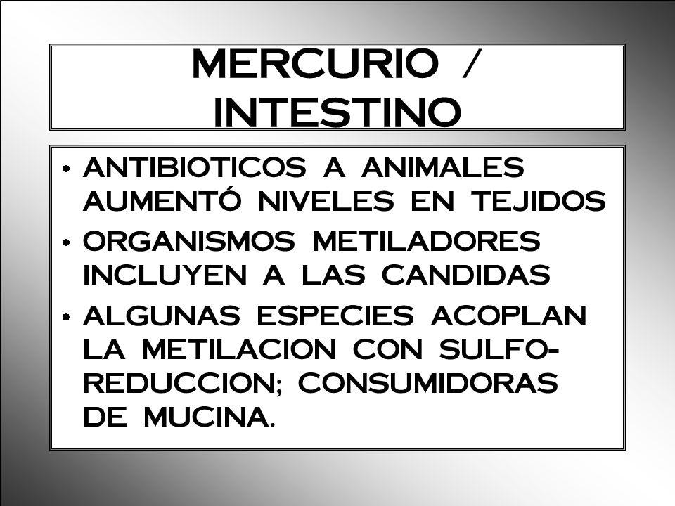 MERCURIO / INTESTINO ANTIBIOTICOS A ANIMALES AUMENTÓ NIVELES EN TEJIDOS ORGANISMOS METILADORES INCLUYEN A LAS CANDIDAS ALGUNAS ESPECIES ACOPLAN LA MET