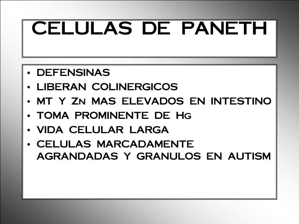 CELULAS DE PANETH DEFENSINAS LIBERAN COLINERGICOS MT Y Zn MAS ELEVADOS EN INTESTINO TOMA PROMINENTE DE Hg VIDA CELULAR LARGA CELULAS MARCADAMENTE AGRA