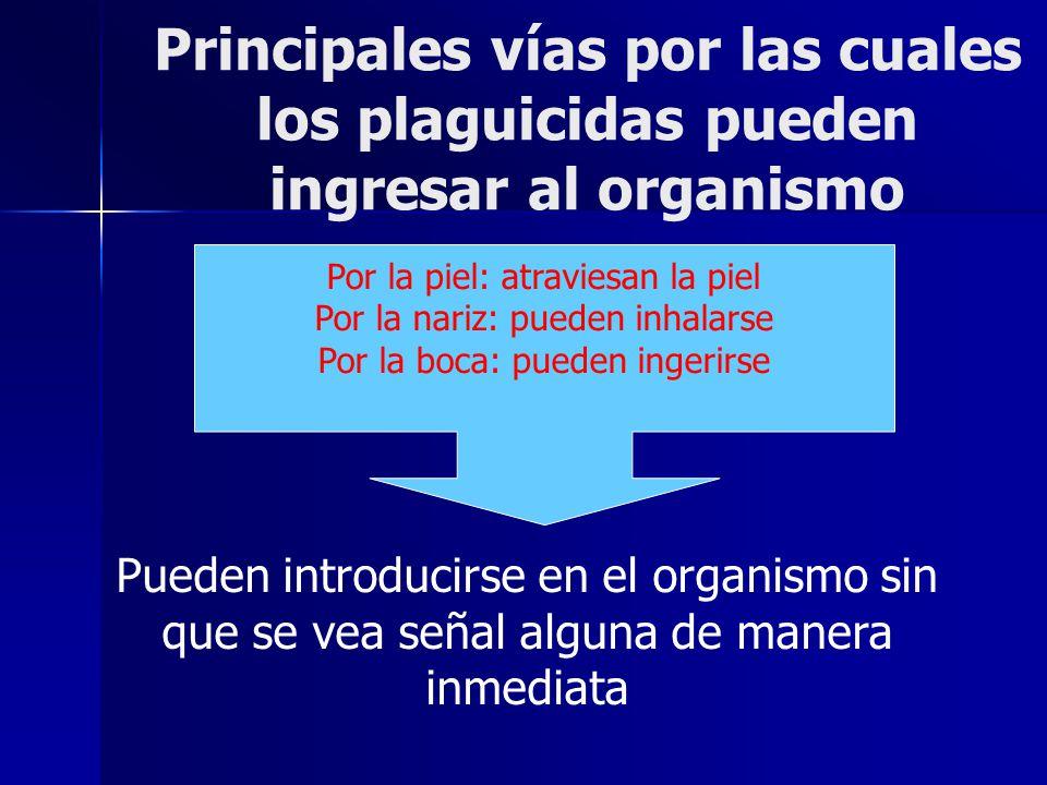 Principales vías por las cuales los plaguicidas pueden ingresar al organismo Por la piel: atraviesan la piel Por la nariz: pueden inhalarse Por la boc