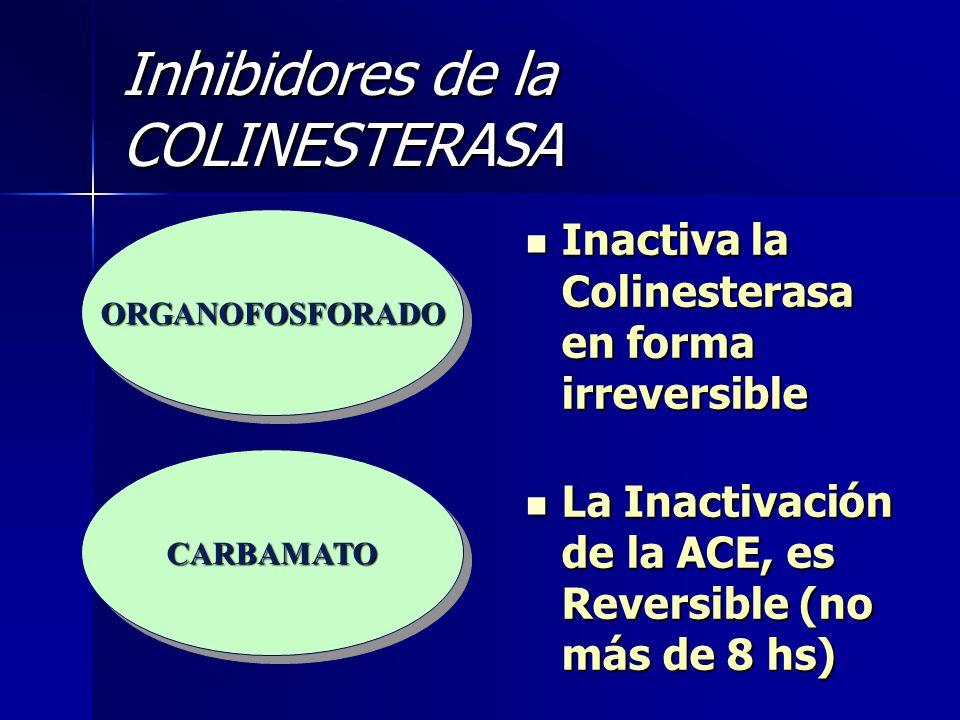 Inhibidores de la COLINESTERASA Inactiva la Colinesterasa en forma irreversible Inactiva la Colinesterasa en forma irreversible La Inactivación de la