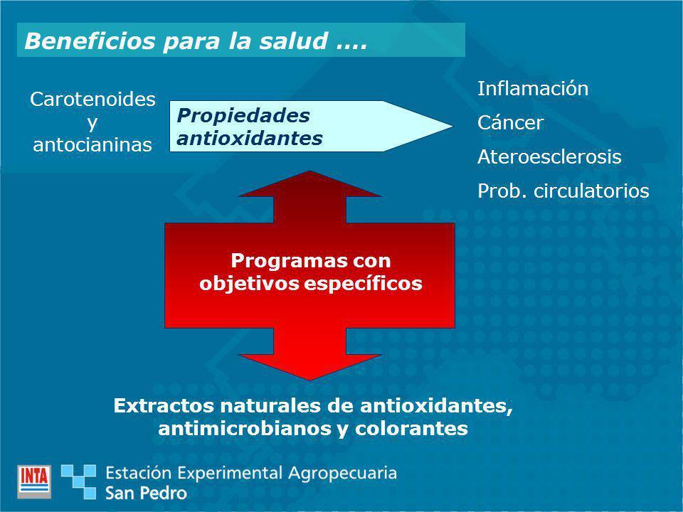 Beneficios para la salud …. Carotenoides y antocianinas Propiedades antioxidantes Inflamación Cáncer Ateroesclerosis Prob. circulatorios Programas con