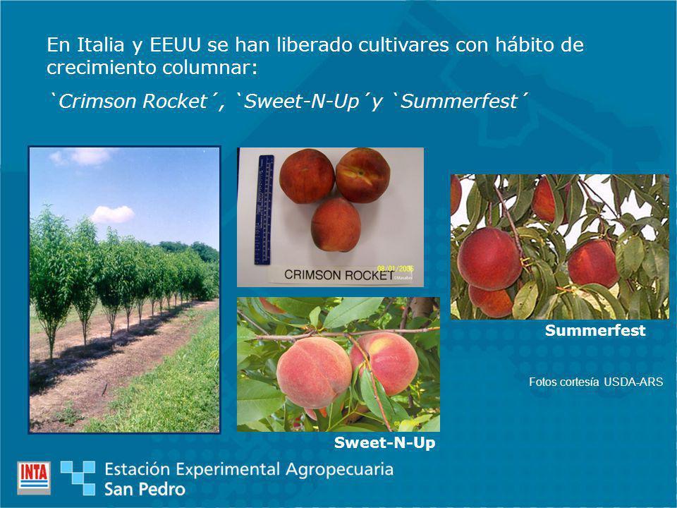 En Italia y EEUU se han liberado cultivares con hábito de crecimiento columnar: `Crimson Rocket´, `Sweet-N-Up´y `Summerfest´ Sweet-N-Up Summerfest Fotos cortesía USDA-ARS