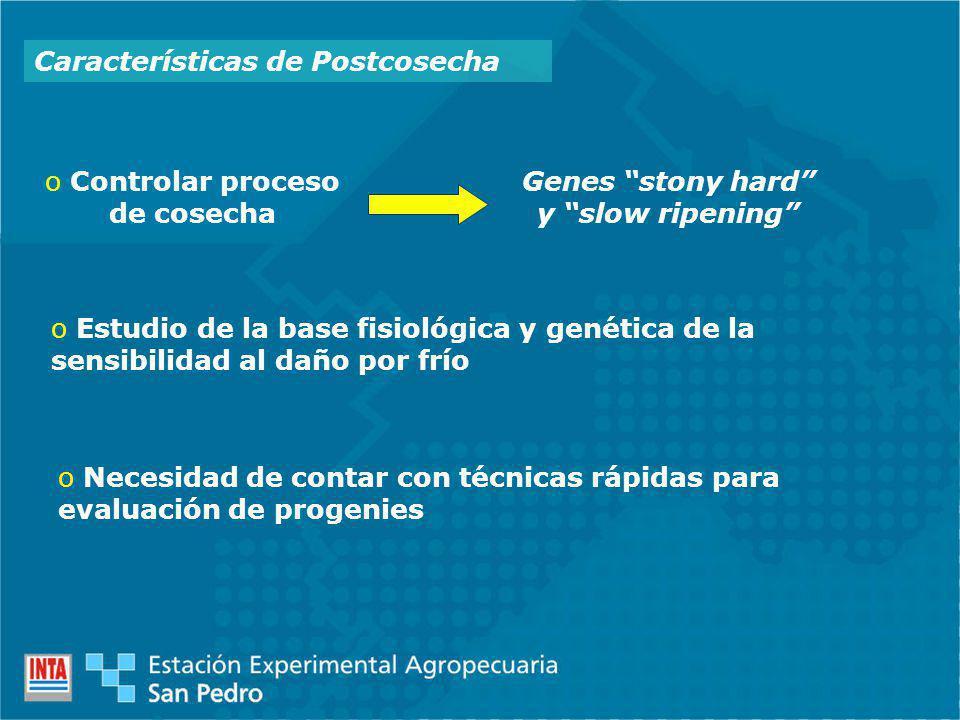 Características de Postcosecha o Controlar proceso de cosecha Genes stony hard y slow ripening o Estudio de la base fisiológica y genética de la sensibilidad al daño por frío o Necesidad de contar con técnicas rápidas para evaluación de progenies