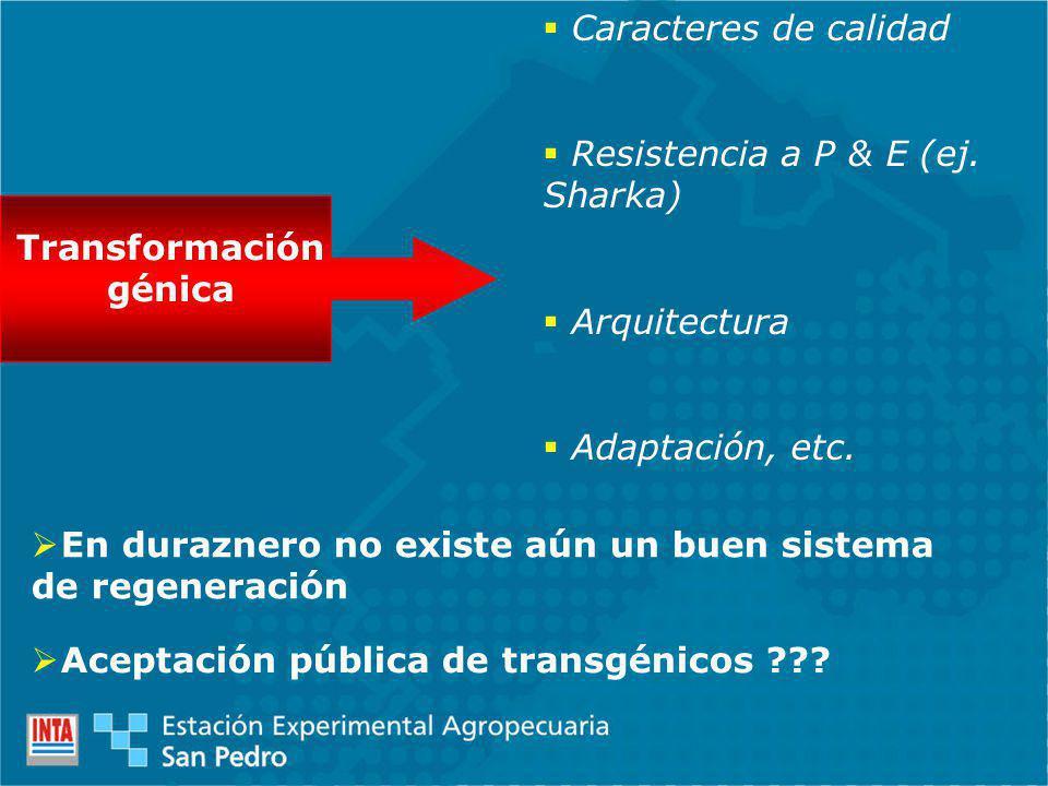 Transformación génica Caracteres de calidad Resistencia a P & E (ej. Sharka) Arquitectura Adaptación, etc. En duraznero no existe aún un buen sistema