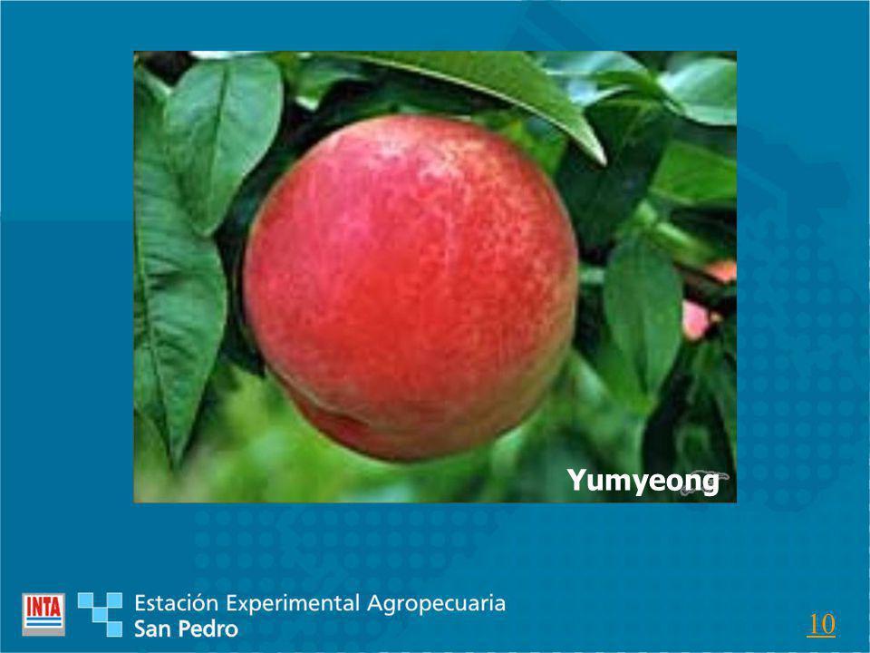 Yumyeong 10