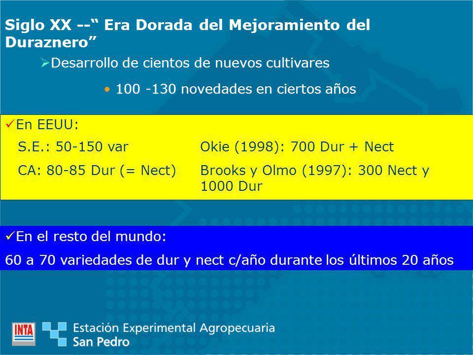 Siglo XX -- Era Dorada del Mejoramiento del Duraznero Desarrollo de cientos de nuevos cultivares 100 -130 novedades en ciertos años En EEUU: S.E.: 50-150 var CA: 80-85 Dur (= Nect) Okie (1998): 700 Dur + Nect Brooks y Olmo (1997): 300 Nect y 1000 Dur En el resto del mundo: 60 a 70 variedades de dur y nect c/año durante los últimos 20 años