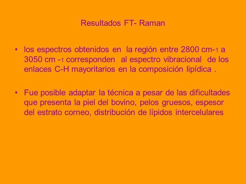 Resultados FT- Raman los espectros obtenidos en la región entre 2800 cm- 1 a 3050 cm - 1 corresponden al espectro vibracional de los enlaces C-H mayor