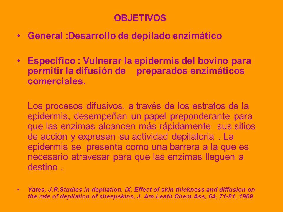 OBJETIVOS General :Desarrollo de depilado enzimático Específico : Vulnerar la epidermis del bovino para permitir la difusión de preparados enzimáticos comerciales.