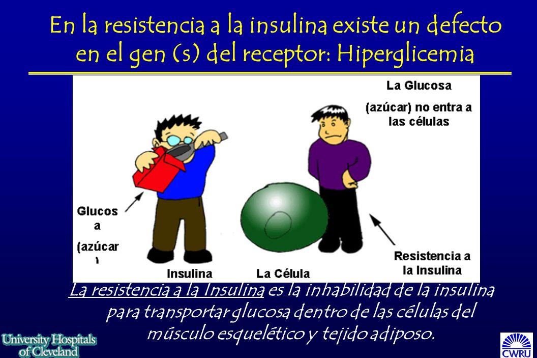 En la resistencia a la insulina existe un defecto en el gen (s) del receptor: Hiperglicemia La resistencia a la Insulina es la inhabilidad de la insulina para transportar glucosa dentro de las células del músculo esquelético y tejido adiposo.