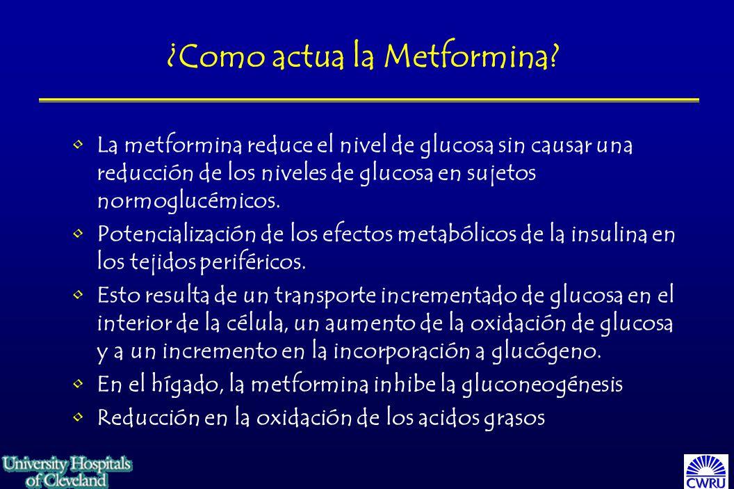 ¿Como actua la Metformina.
