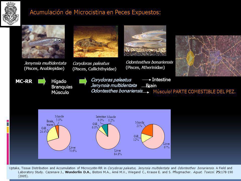 CUENCA DEL RÍO SUQUÍA: Contaminantes Orgánicos y Toxinas Microcistinas Hidrocarburos y Tensioáctivos Bencenos clorados Lindano (HCH)