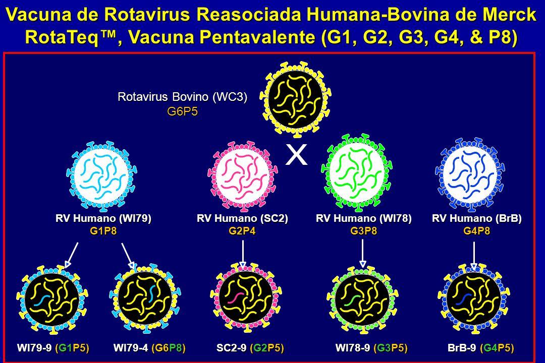 Vacuna de Rotavirus Reasociada Humana-Bovina de Merck RotaTeq, Vacuna Pentavalente (G1, G2, G3, G4, & P8) RV Humano (WI79) G1P8 Rotavirus Bovino (WC3)