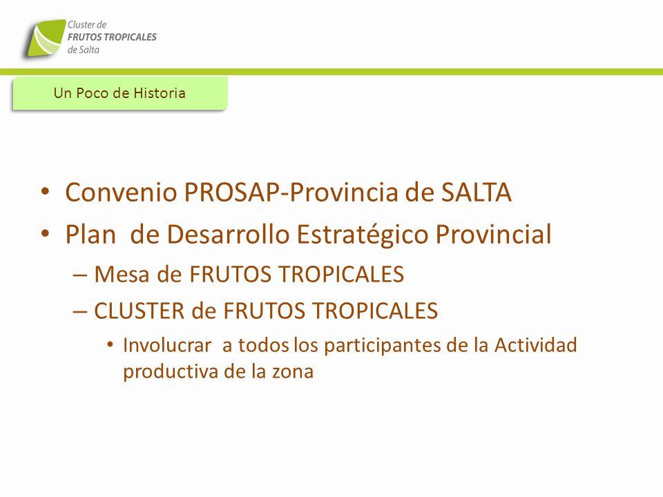Convenio PROSAP-Provincia de SALTA Plan de Desarrollo Estratégico Provincial – Mesa de FRUTOS TROPICALES – CLUSTER de FRUTOS TROPICALES Involucrar a t