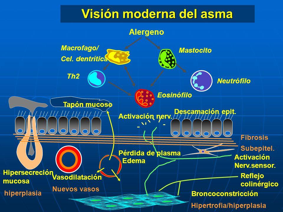 Eosinófilo Mastocito Alergeno Th2 Visión moderna del asma Vasodilatación Pérdida de plasma Edema Neutrófilo Hipersecreción mucosa Tapón mucoso Macrofa