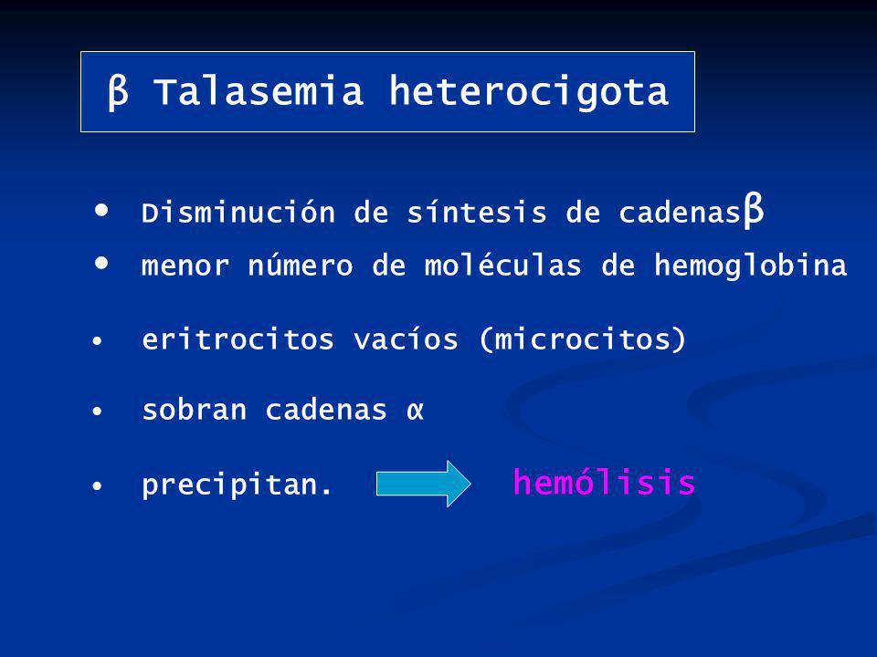 β Talasemia heterocigota Disminución de síntesis de cadenas β menor número de moléculas de hemoglobina eritrocitos vacíos (microcitos) sobran cadenas α precipitan.