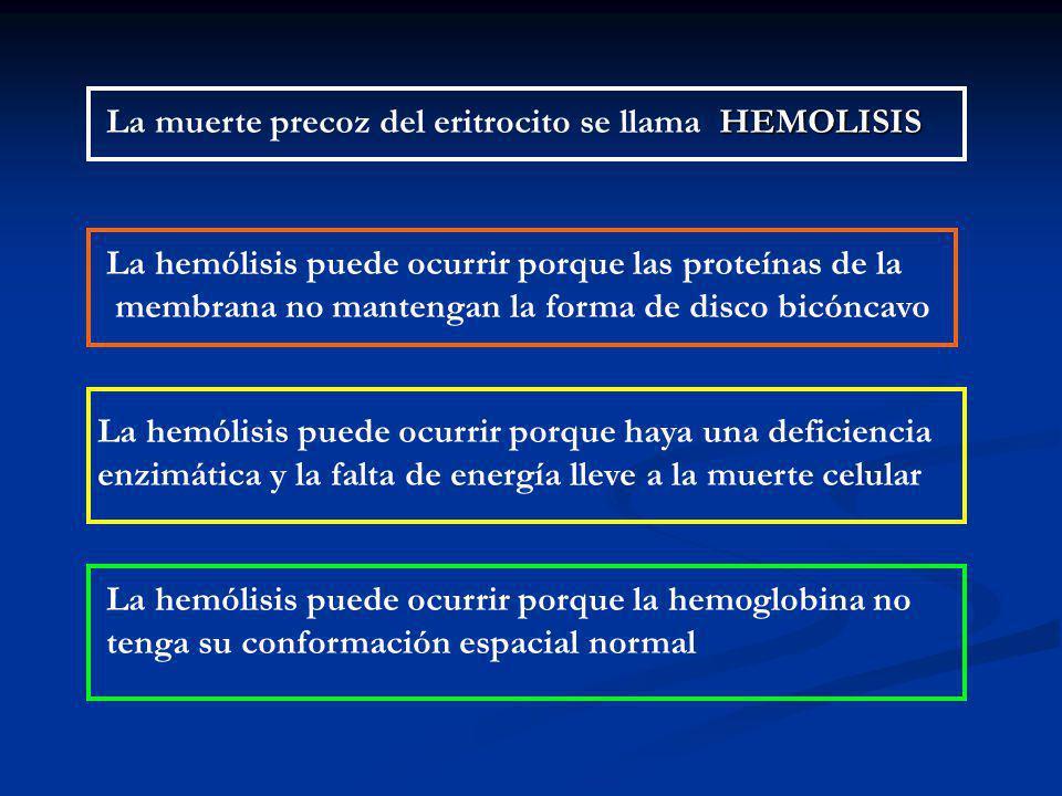 HEMOLISIS La muerte precoz del eritrocito se llama HEMOLISIS La hemólisis puede ocurrir porque las proteínas de la membrana no mantengan la forma de disco bicóncavo La hemólisis puede ocurrir porque haya una deficiencia enzimática y la falta de energía lleve a la muerte celular La hemólisis puede ocurrir porque la hemoglobina no tenga su conformación espacial normal