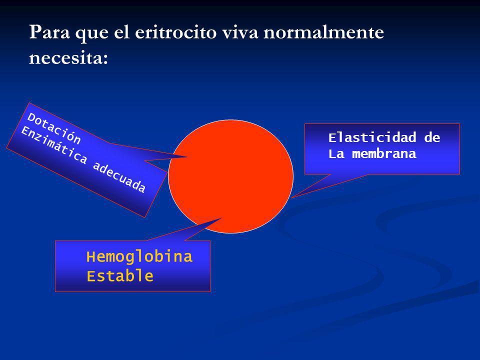 Para que el eritrocito viva normalmente necesita: Elasticidad de La membrana Dotación Enzimática adecuada Hemoglobina Estable