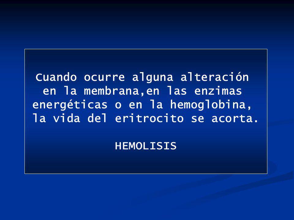 qué pasa con la cantidad de Hb en cada eritrocito.