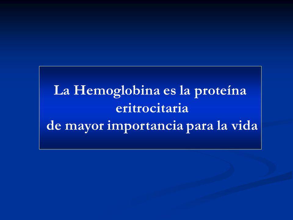 La Hemoglobina es la proteína eritrocitaria de mayor importancia para la vida