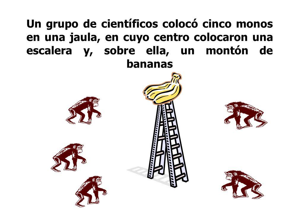 Un grupo de científicos colocó cinco monos en una jaula, en cuyo centro colocaron una escalera y, sobre ella, un montón de bananas