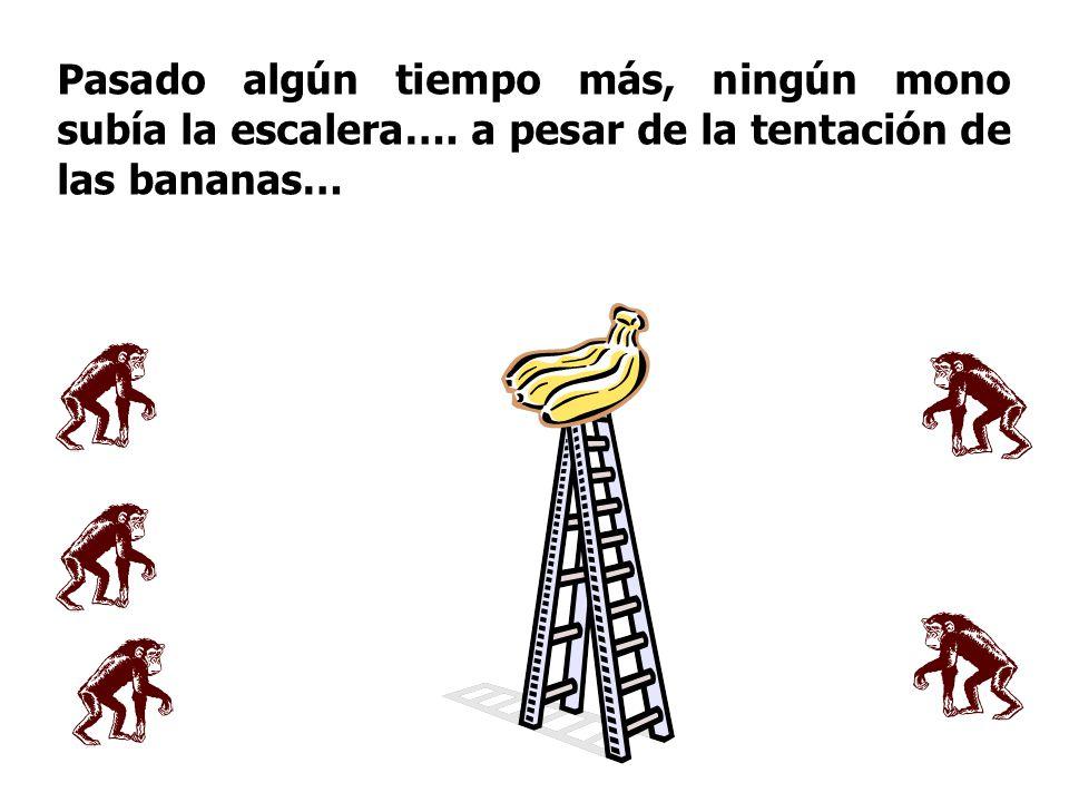 Pasado algún tiempo más, ningún mono subía la escalera…. a pesar de la tentación de las bananas…