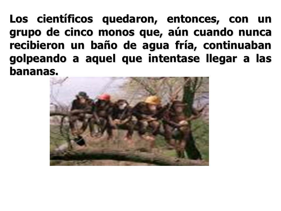Los científicos quedaron, entonces, con un grupo de cinco monos que, aún cuando nunca recibieron un baño de agua fría, continuaban golpeando a aquel q