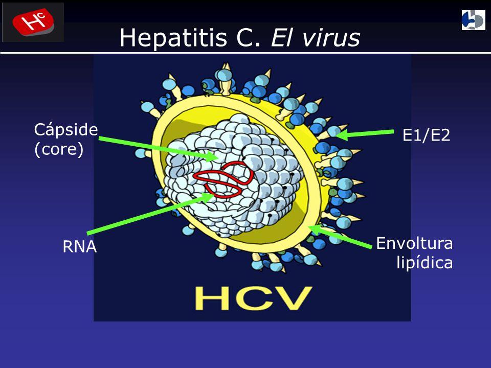 Consenso Argentino Hepatitis C, AAEEH 2004 CDC MMWR 1998;47 (No.