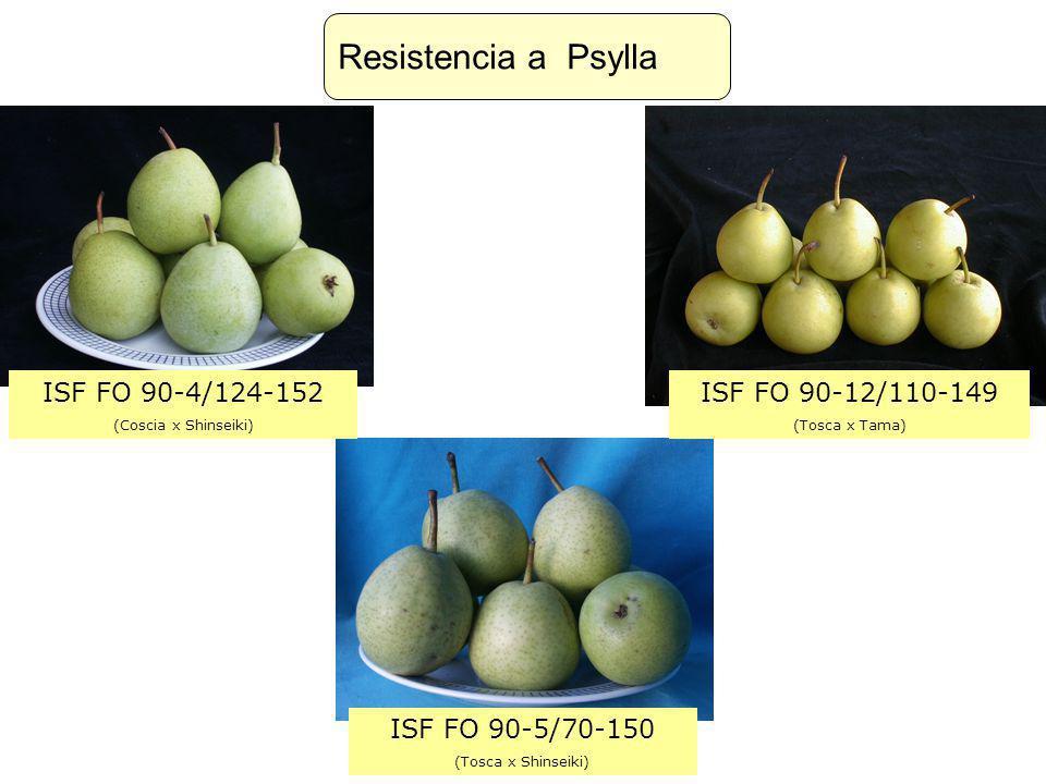 ISF FO 90-4/124-152 (Coscia x Shinseiki) ISF FO 90-12/110-149 (Tosca x Tama) ISF FO 90-5/70-150 (Tosca x Shinseiki) Resistencia a Psylla