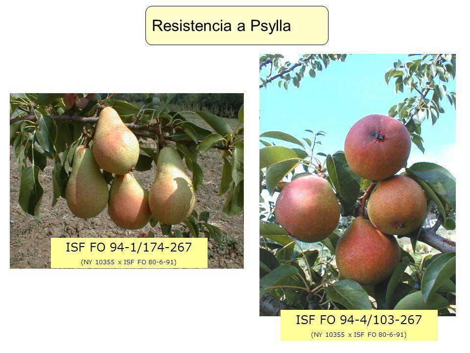 ISF FO 94-1/174-267 (NY 10355 x ISF FO 80-6-91) ISF FO 94-4/103-267 (NY 10355 x ISF FO 80-6-91) Resistencia a Psylla