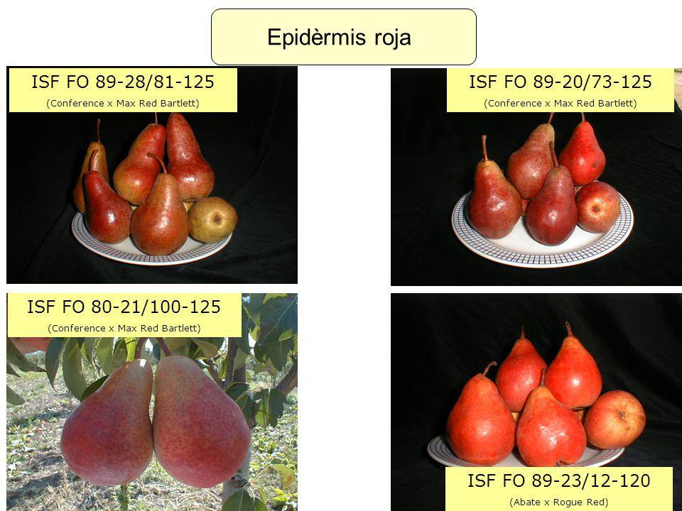 Epidèrmis roja ISF FO 89-28/81-125 (Conference x Max Red Bartlett) ISF FO 89-20/73-125 (Conference x Max Red Bartlett) ISF FO 80-21/100-125 (Conference x Max Red Bartlett) ISF FO 89-23/12-120 (Abate x Rogue Red)