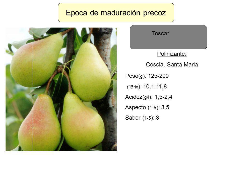 Epoca de maduración precoz Tosca* Polinizante: Coscia, Santa Maria Peso( g ): 125-200 (°Brix ): 10,1-11,8 Acidez( g/l ): 1,5-2,4 Aspecto ( 1-5 ): 3,5
