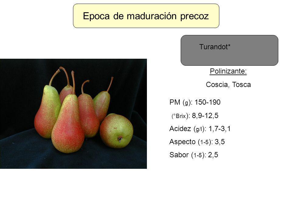 Epoca de maduración precoz Turandot* Polinizante: Coscia, Tosca PM ( g ): 150-190 (°Brix ): 8,9-12,5 Acidez ( g/l ): 1,7-3,1 Aspecto ( 1-5 ): 3,5 Sabo