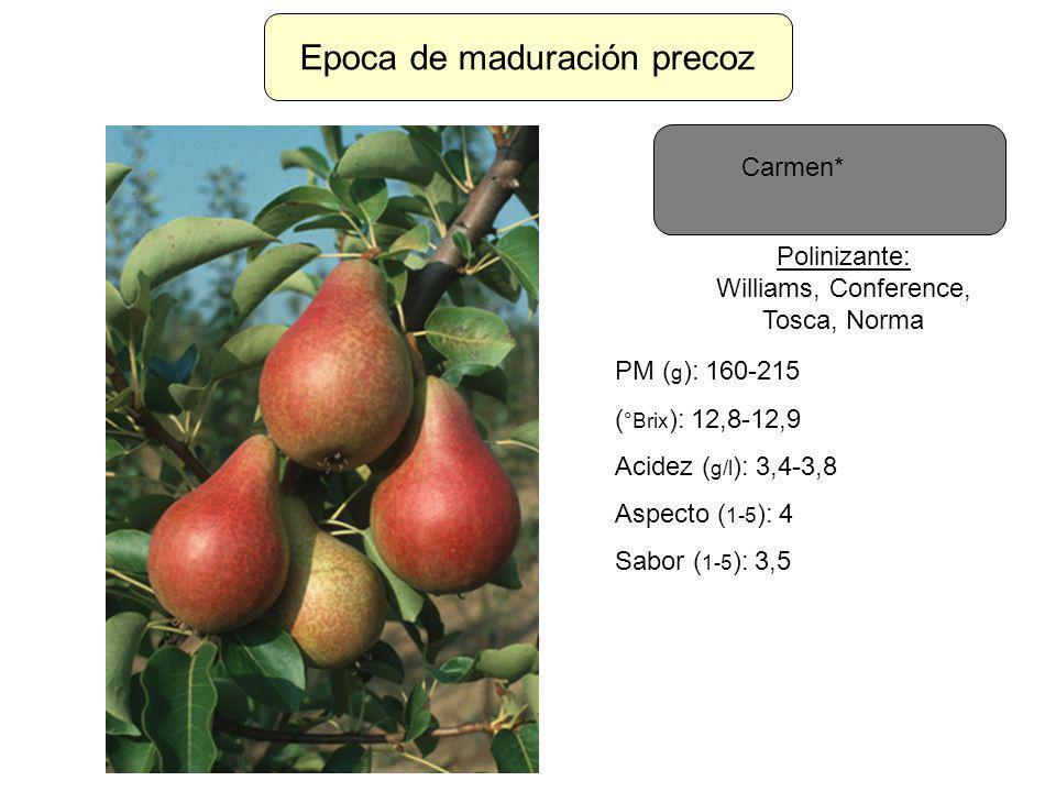 Epoca de maduración precoz Carmen* Polinizante: Williams, Conference, Tosca, Norma PM ( g ): 160-215 ( °Brix ): 12,8-12,9 Acidez ( g/l ): 3,4-3,8 Aspe