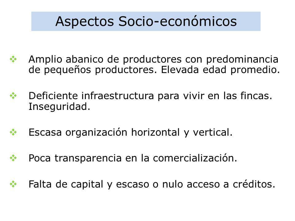 Aspectos Socio-económicos Amplio abanico de productores con predominancia de pequeños productores. Elevada edad promedio. Deficiente infraestructura p