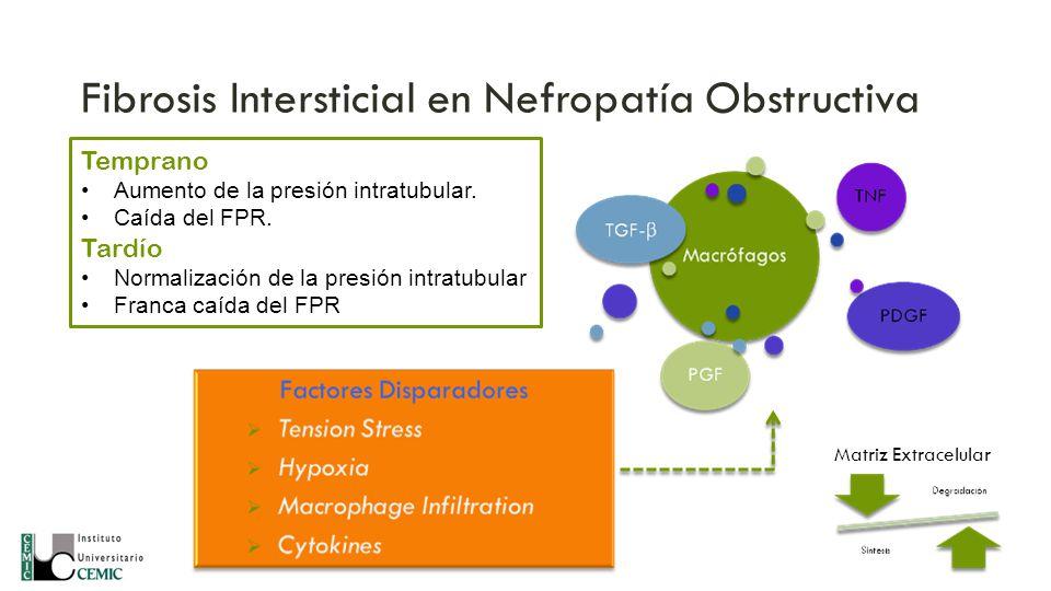 Fibrosis Intersticial en Nefropatía Obstructiva Matriz Extracelular Temprano Aumento de la presión intratubular. Caída del FPR. Tardío Normalización d