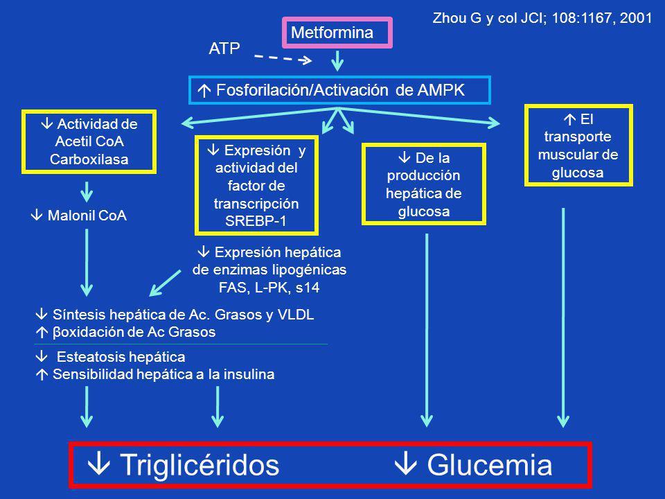Metformina Fosforilación/Activación de AMPK ATP Actividad de Acetil CoA Carboxilasa Expresión y actividad del factor de transcripción SREBP-1 De la pr