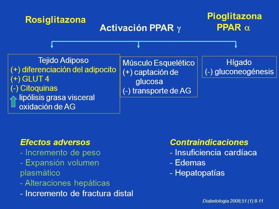 Activación PPAR Tejido Adiposo (+) diferenciación del adipocito (+) GLUT 4 (-) Citoquinas lipólisis grasa visceral oxidación de AG Músculo Esquelético