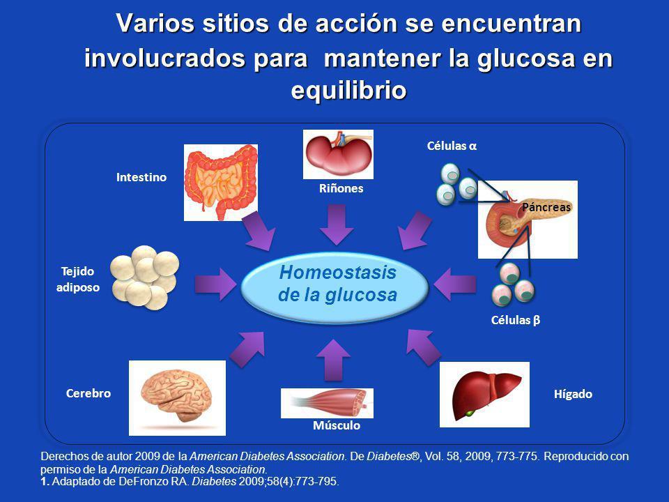 Varios sitios de acción se encuentran involucrados para mantener la glucosa en equilibrio Tejido adiposo Homeostasis de la glucosa 1. Adaptado de DeFr
