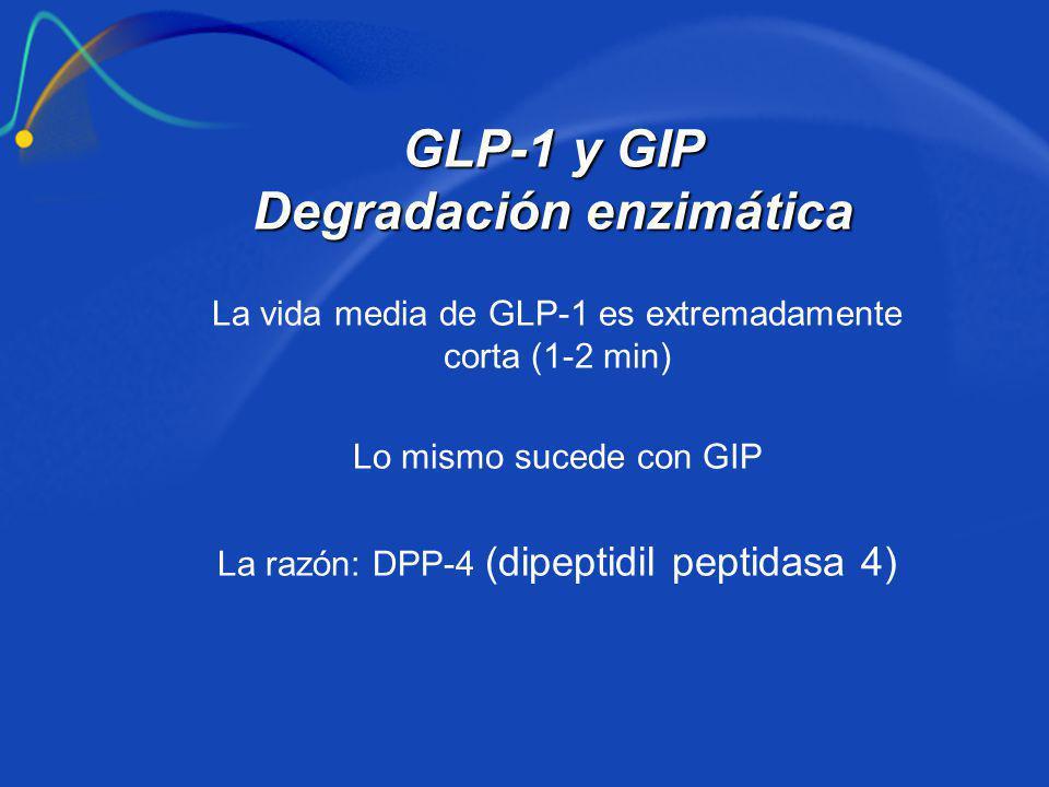 GLP-1 y GIP Degradación enzimática La vida media de GLP-1 es extremadamente corta (1-2 min) Lo mismo sucede con GIP La razón: DPP-4 (dipeptidil peptid