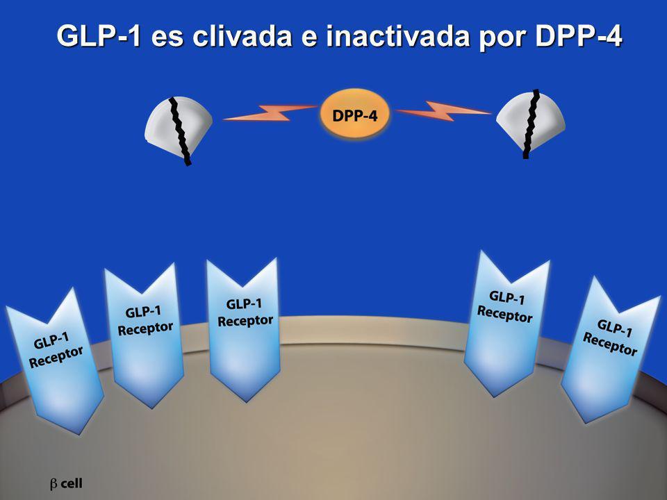 GLP-1 es clivada e inactivada por DPP-4
