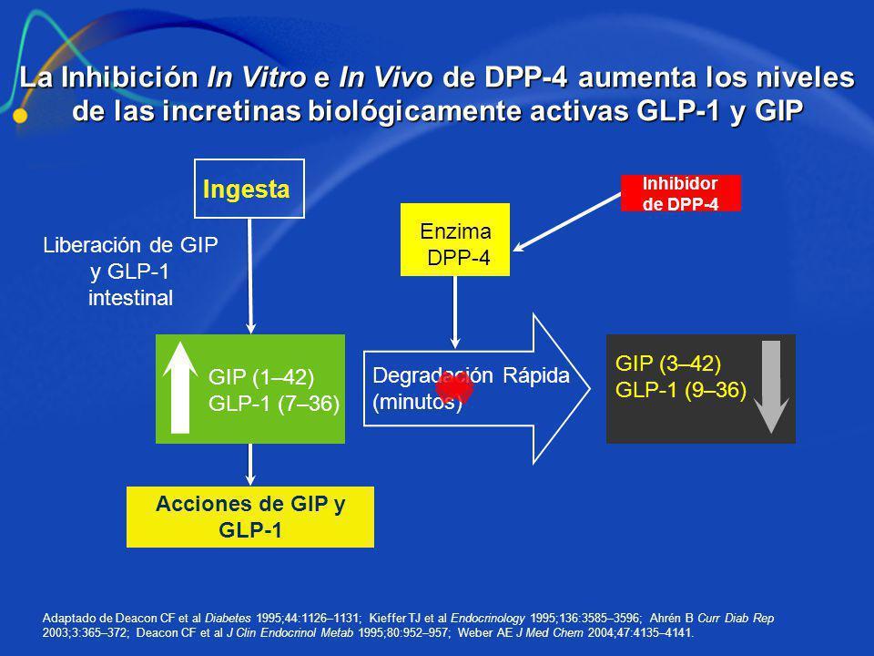 La Inhibición In Vitro e In Vivo de DPP-4 aumenta los niveles de las incretinas biológicamente activas GLP-1 y GIP Adaptado de Deacon CF et al Diabete