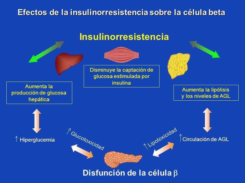 Efectos de la insulinorresistencia sobre la célula beta Efectos de la insulinorresistencia sobre la célula beta Hiperglucemia Insulinorresistencia Dis