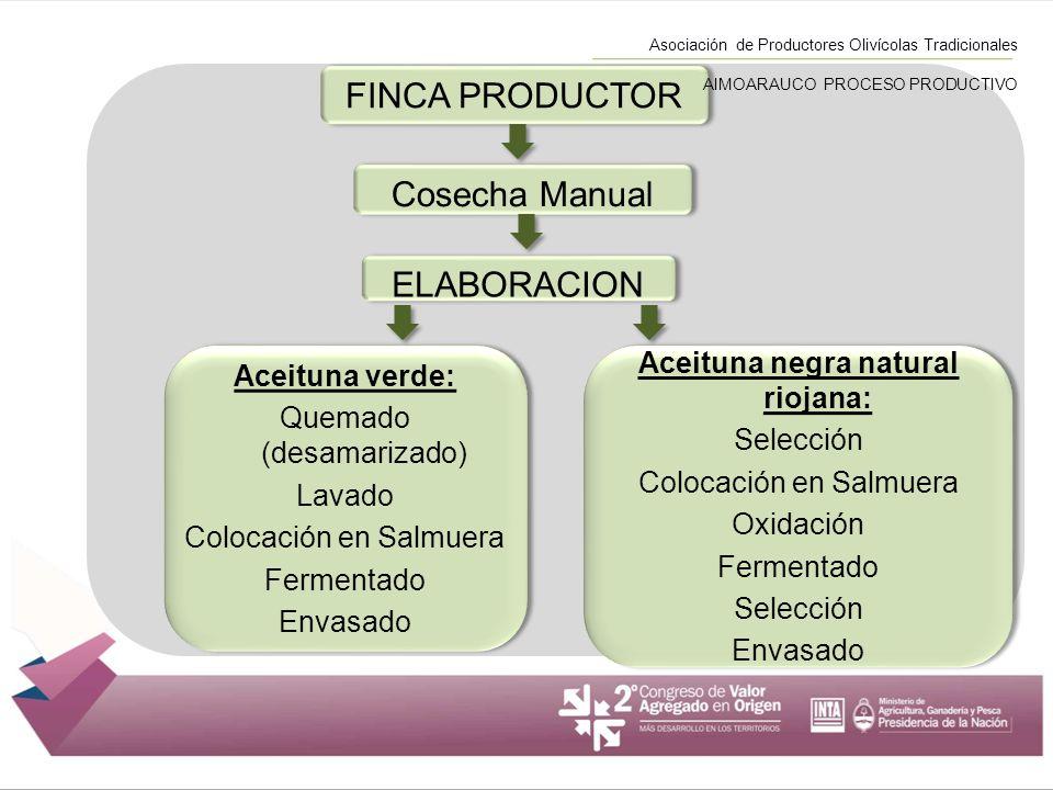 FINCA PRODUCTOR ELABORACION Aceituna verde: Quemado (desamarizado) Lavado Colocación en Salmuera Fermentado Envasado Aceituna verde: Quemado (desamari