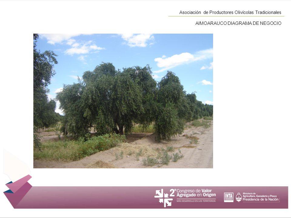Asociación de Productores Olivícolas Tradicionales AIMOARAUCO DIAGRAMA DE NEGOCIO
