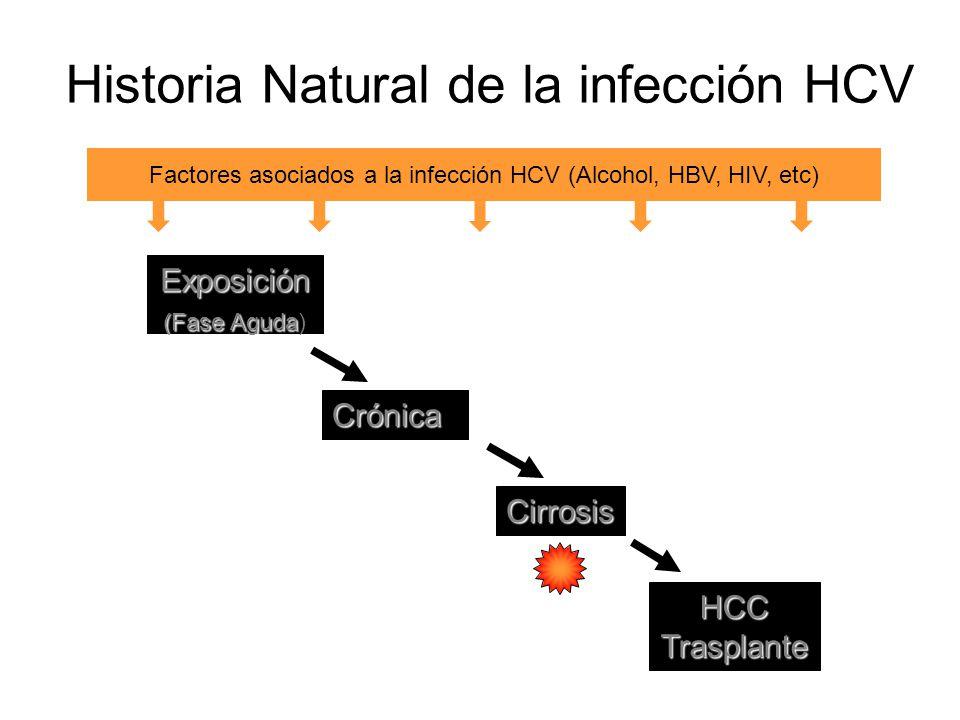 Historia Natural de la infección HCV Exposición (Fase Aguda (Fase Aguda) Crónica Cirrosis HCCTrasplante Factores asociados a la infección HCV (Alcohol