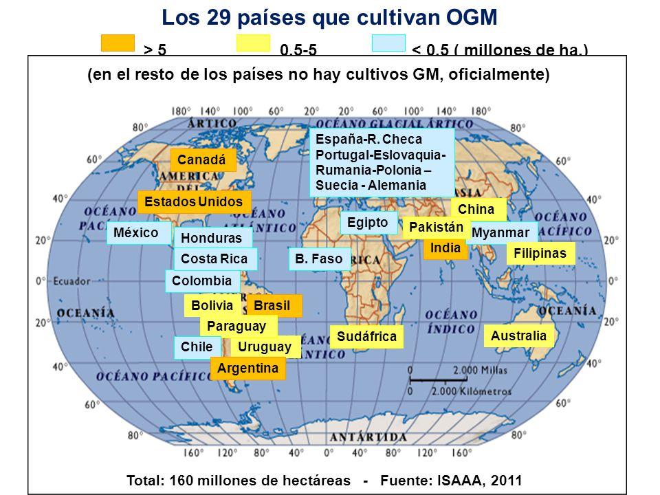 0,1 Fuente: ISAAA, 2011 Los cultivos genéticamente modificados en el mundo - 2011 Mega productores 50.000 hectáreas o más Estados Unidos Brasil* Argentina* India* Canadá China* Paraguay* Pakistán* Sudáfrica* Uruguay* Bolivia* Australia Filipinas* Myanmar* Burkina Faso* México* España 69,0 30,3 23,7 10,6 10,4 3,9 2,8 2,6 2,3 1,3 0,9 0,7 0,6 0,3 0,2 0,1 Menos de 50.000 hectáreas * Países en desarrollo Colombia* Chile* Honduras* Portugal República Checa Polonia Egipto* Eslovaquia Costa Rica* Rumanía Suecia Alemania Millones ha 16,7 millones de agricultores de 29 países sembraron cultivos GM en 160 millones de has.
