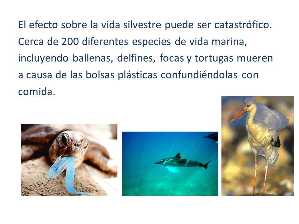 El efecto sobre la vida silvestre puede ser catastrófico. Cerca de 200 diferentes especies de vida marina, incluyendo ballenas, delfines, focas y tort