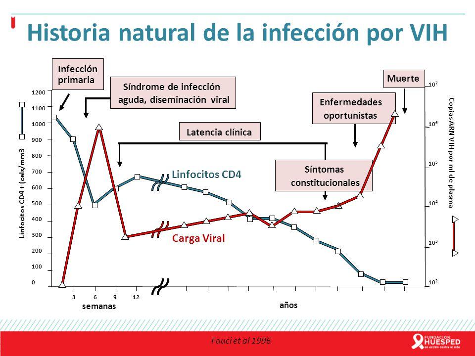 Fauci et al 1996 semanas años Linfocitos CD4 + (cels/mm3 Copias ARN VIH por ml de plasma 10 7 10 6 10 5 10 4 10 3 10 2 3 6 9 12 1200 1100 1000 900 800