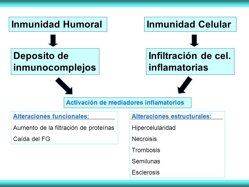 Inmunidad HumoralInmunidad Celular Deposito de inmunocomplejos Infiltración de cel. inflamatorias Activación de mediadores inflamatorios Alteraciones