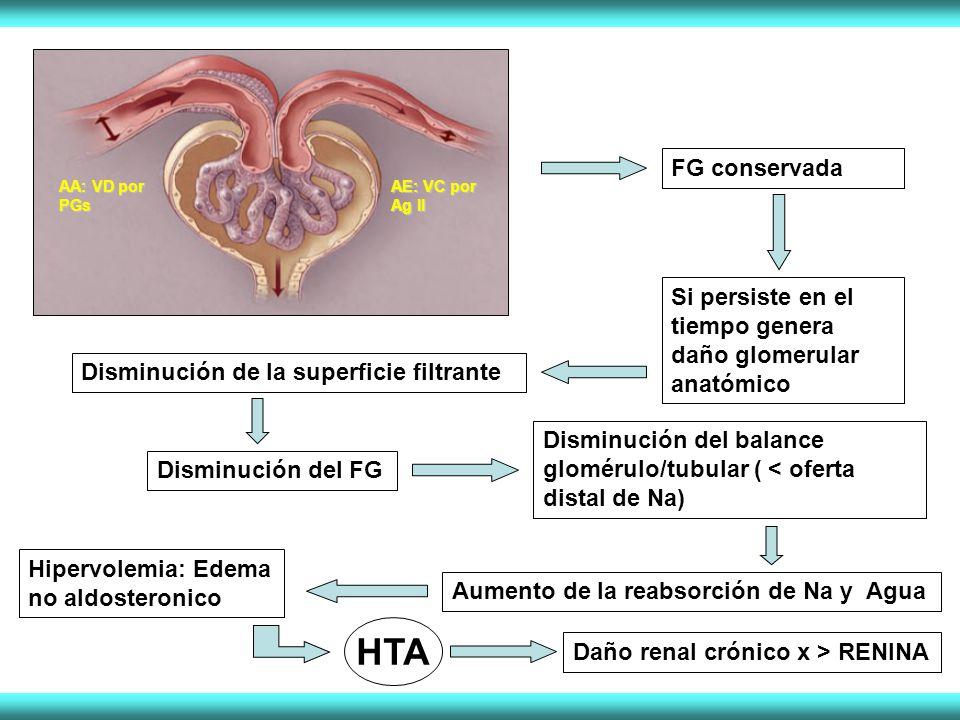 AA: VD por PGs AE: VC por Ag II FG conservada Si persiste en el tiempo genera daño glomerular anatómico Disminución de la superficie filtrante Disminución del FG Disminución del balance glomérulo/tubular ( < oferta distal de Na) Aumento de la reabsorción de Na y Agua Hipervolemia: Edema no aldosteronico HTA Daño renal crónico x > RENINA